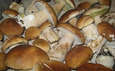 Жарка грибов в мультиварке рецепты с фото