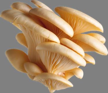 Жаркое с грибами в мультиварке рецепты с фото